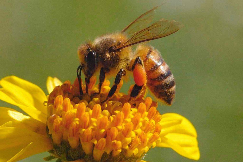 prevenirea bolilor la albine
